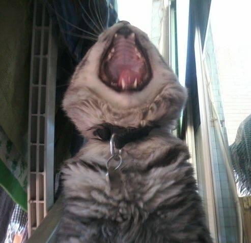 Il linguaggio dei gatti amico mio for Il linguaggio dei gatti